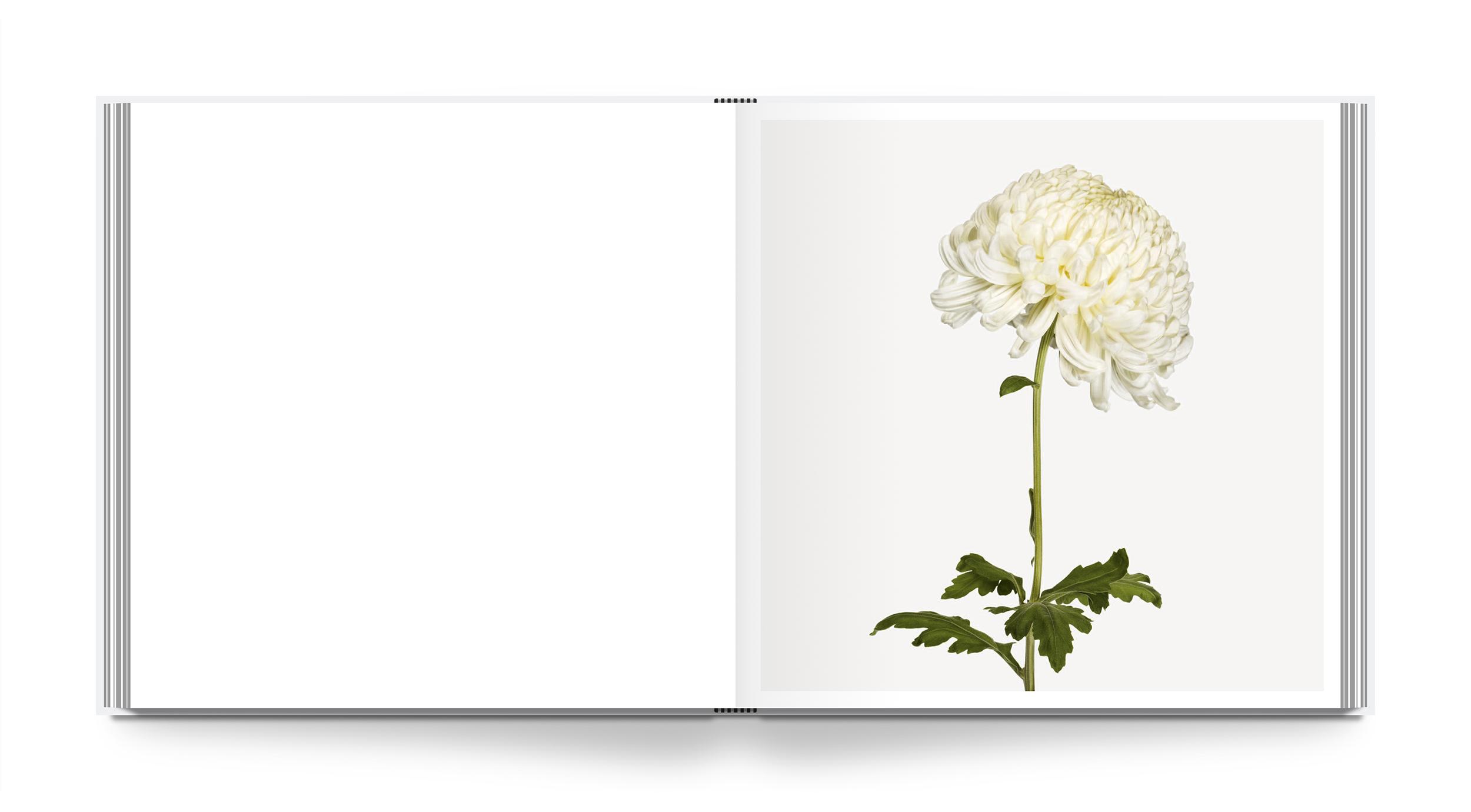 az-flower-int-2.jpg