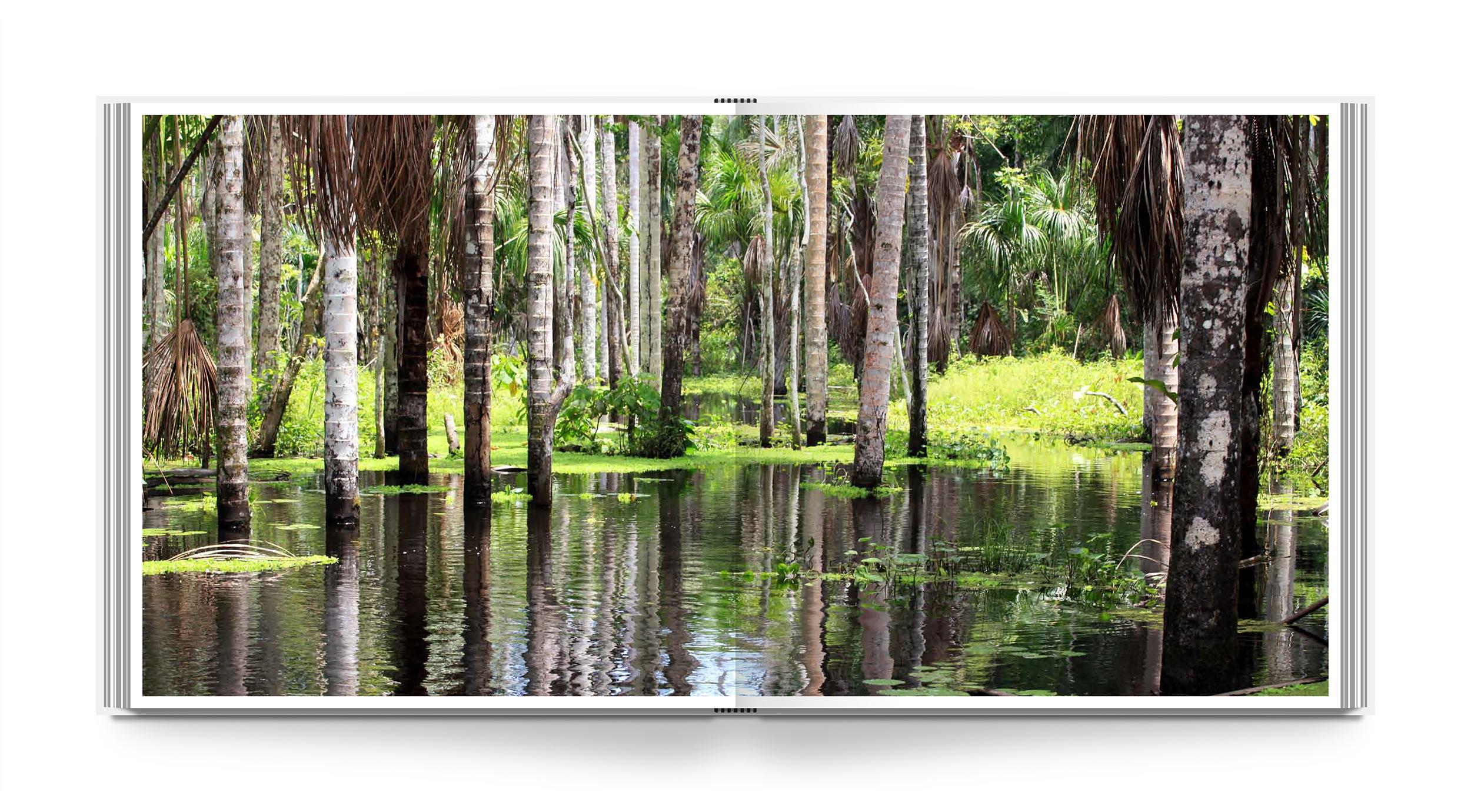 lb-rainforest-int-1.jpg