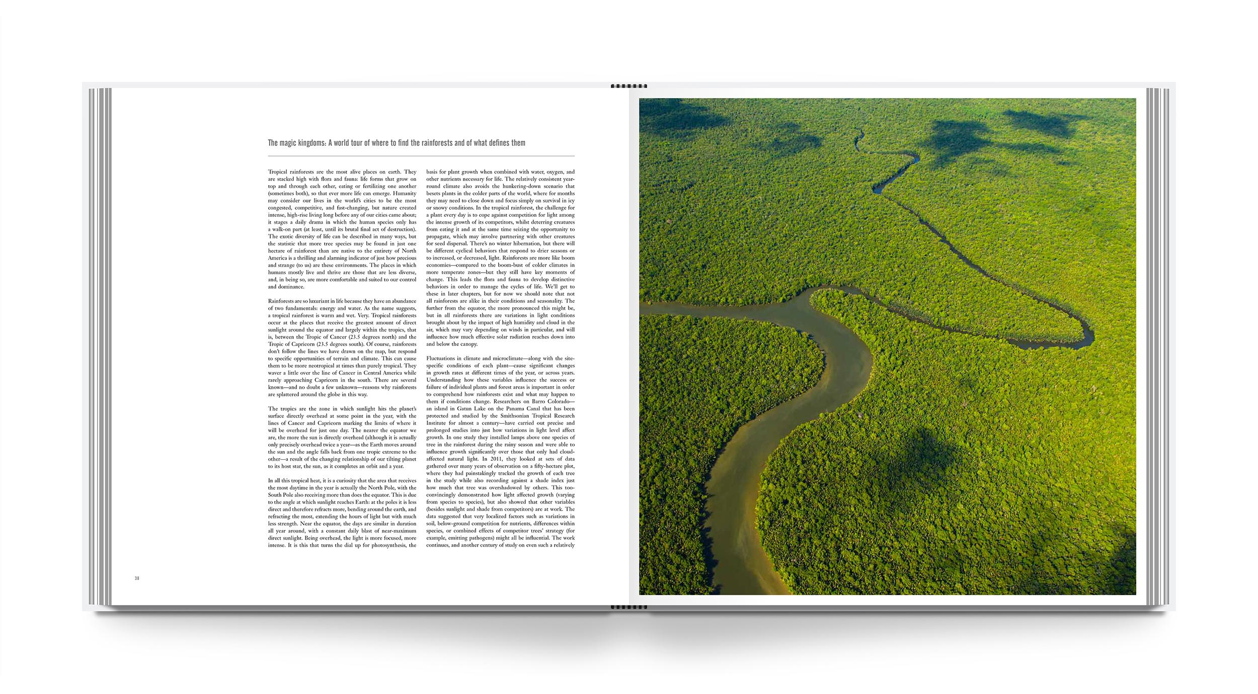 lb-rainforest-int-2.jpg