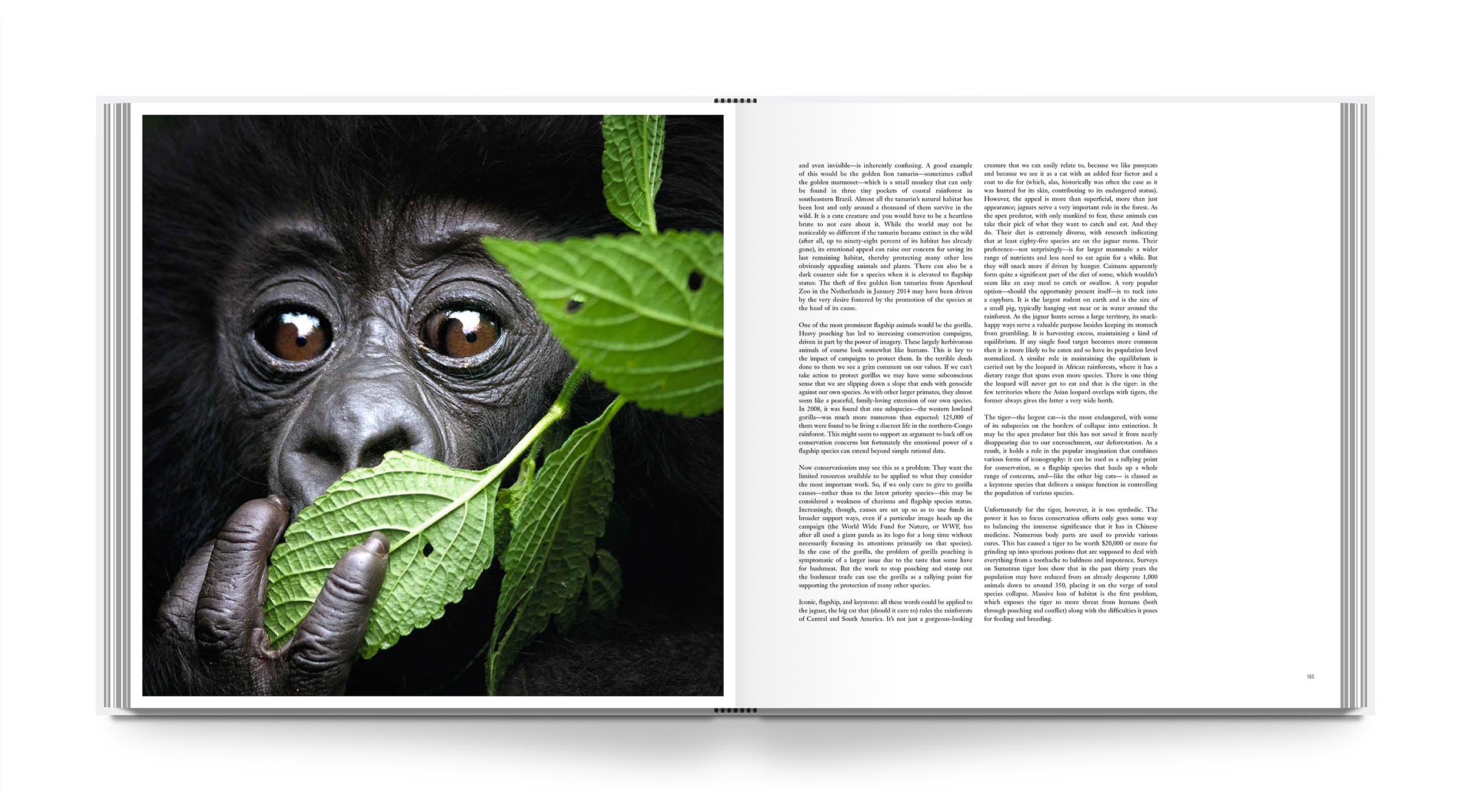 lb-rainforest-int-3.jpg