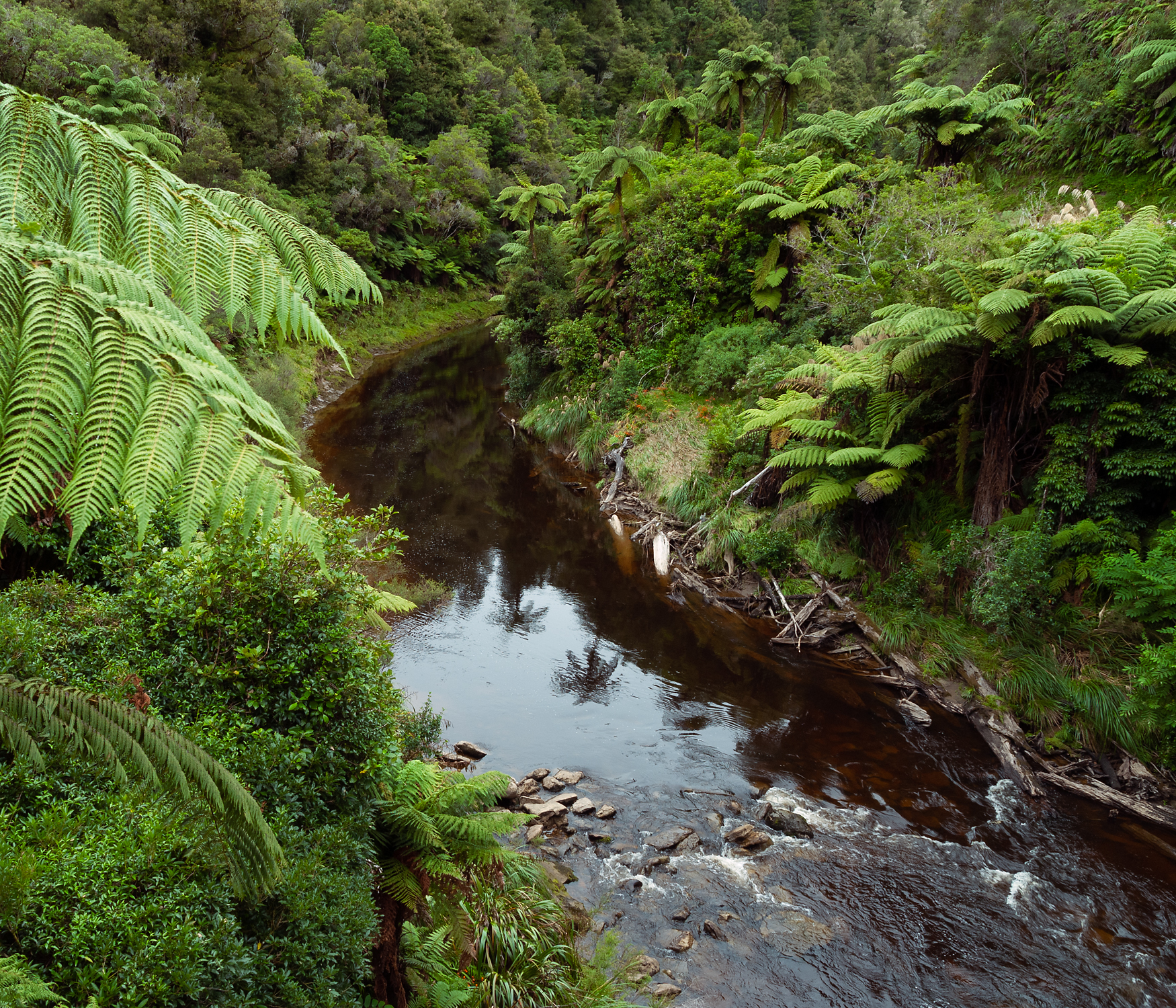 North Island forest