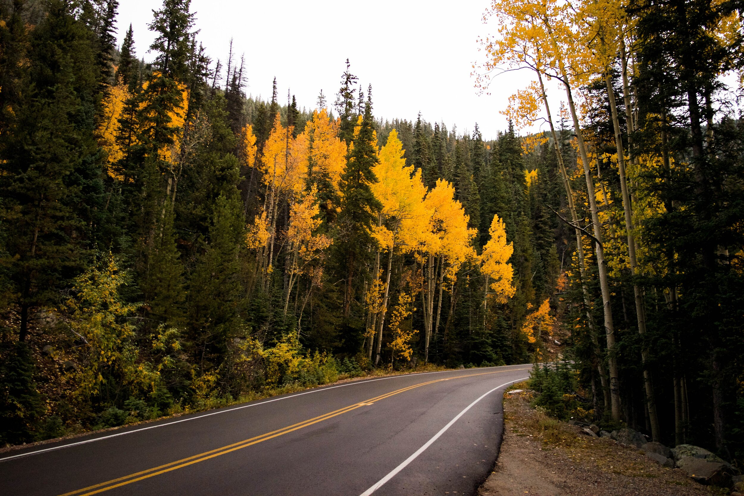 clear-sky-conifers-curvy-road-197900.jpg