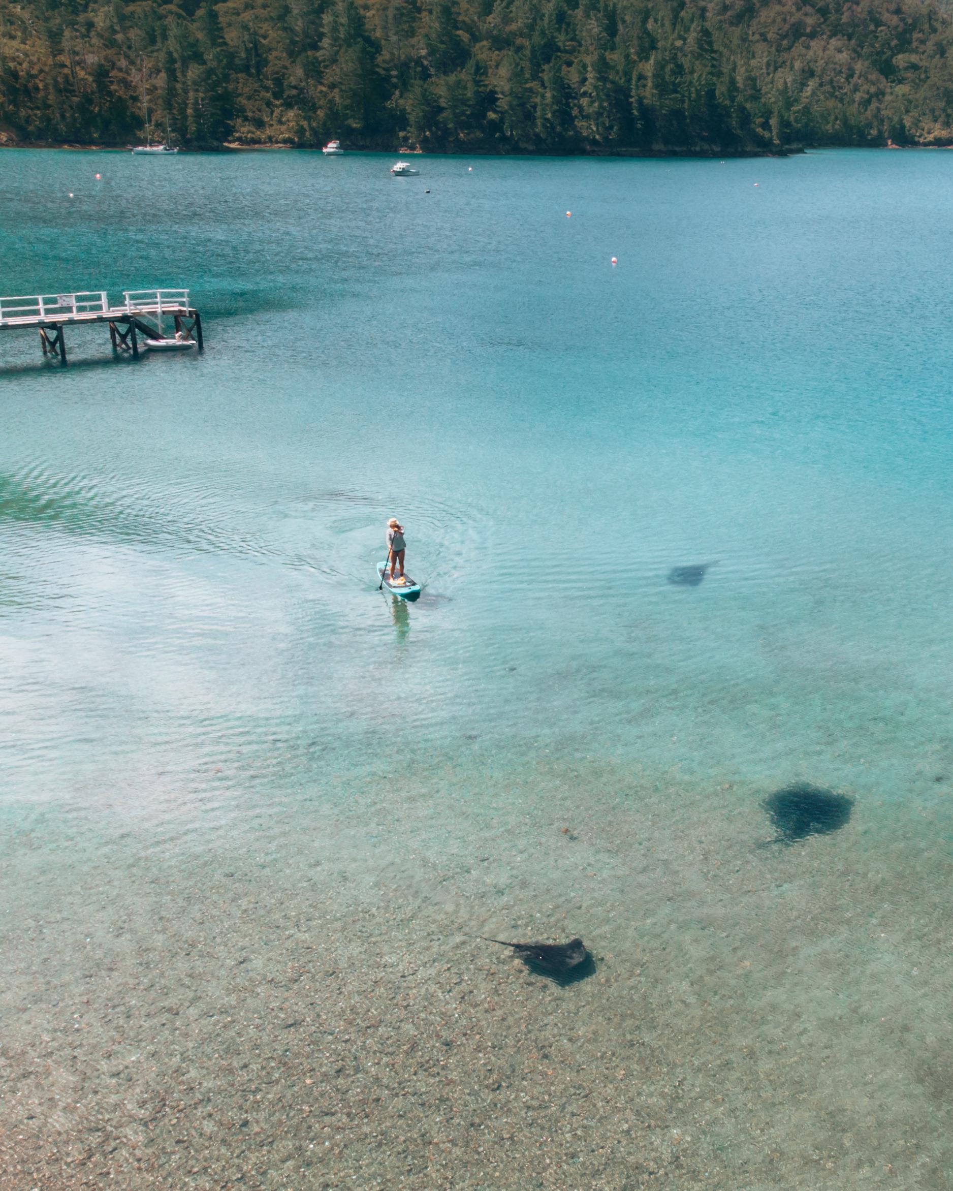 Paddleboarding Stingrays Elaine Bay best SUP spots New Zealand
