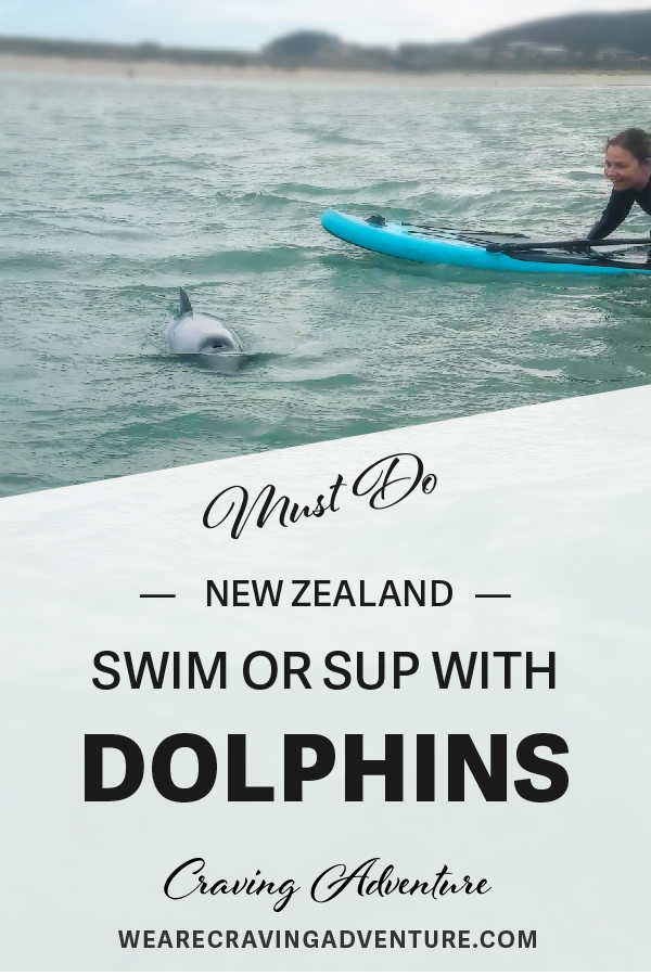 Travel New Zealand Must Do Swim With Dolphins Curio Bay