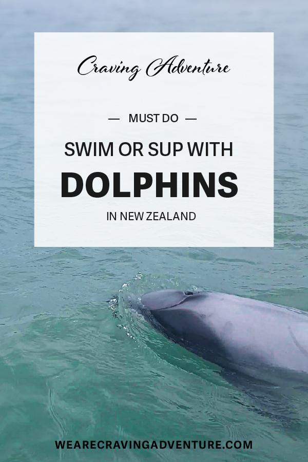 Swim with Doplhins Curio Bay New Zealand Travel Must Do