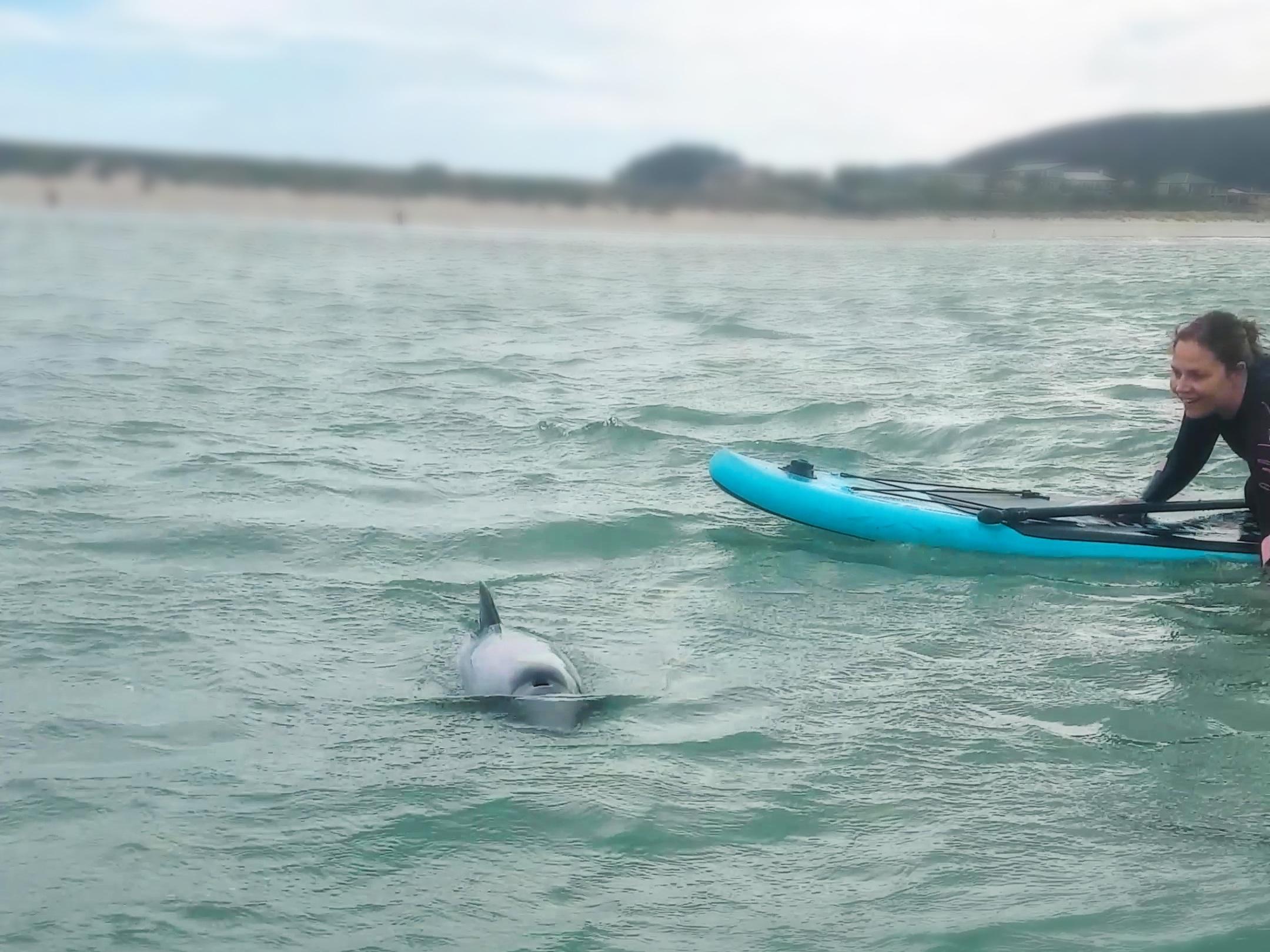 Swim with Doplhins Curio Bay New Zealand Travel