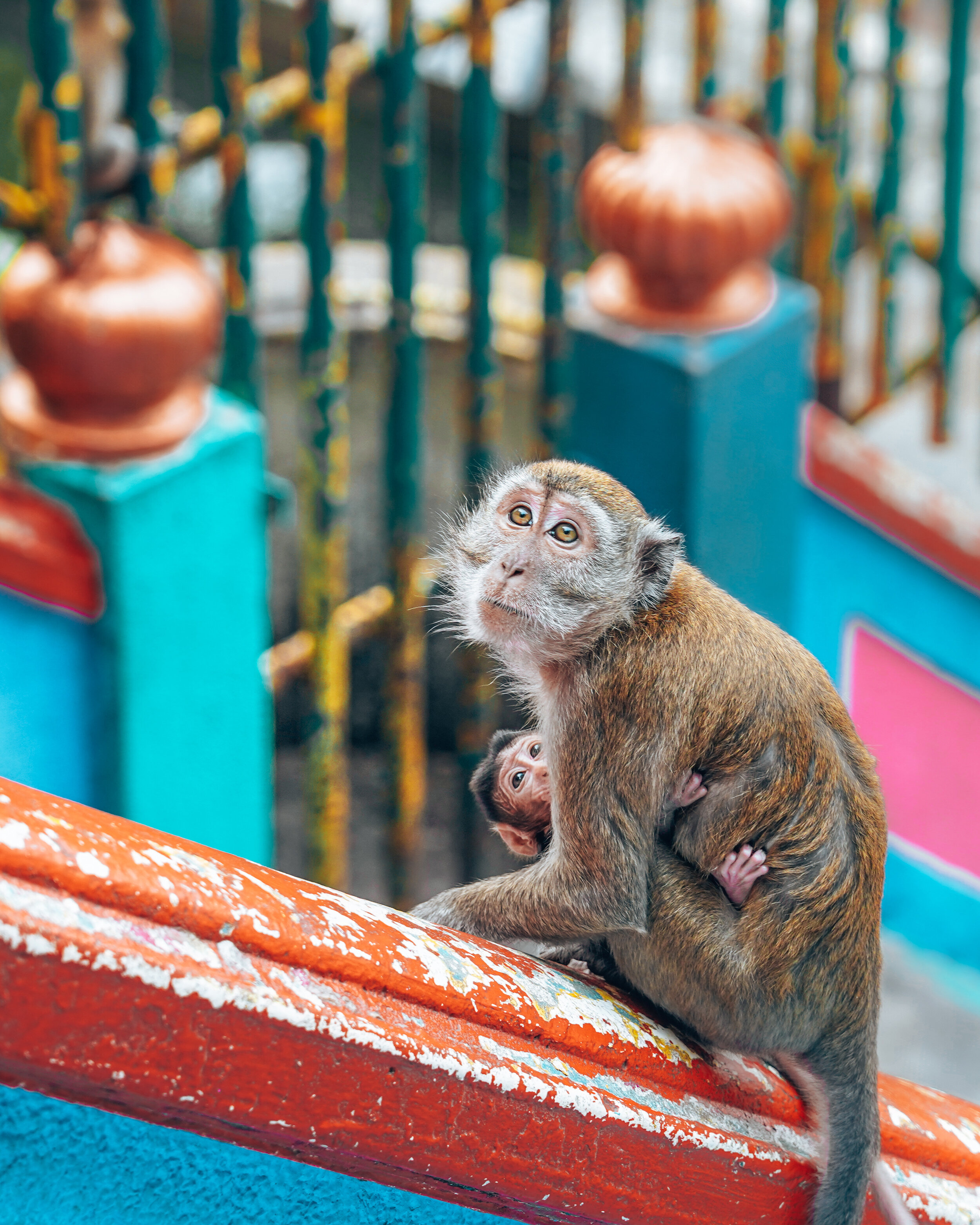Best things to do in Kuala Lumpur - 3 day itinerary to KL - Batu Caves Monkeys