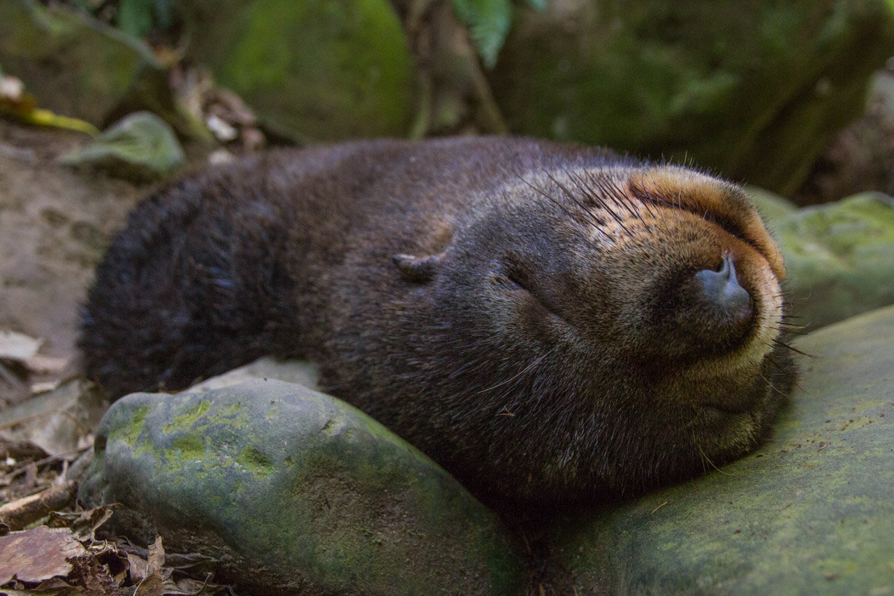 Seals Ohua Stream Best Places to see wildlife New Zealand