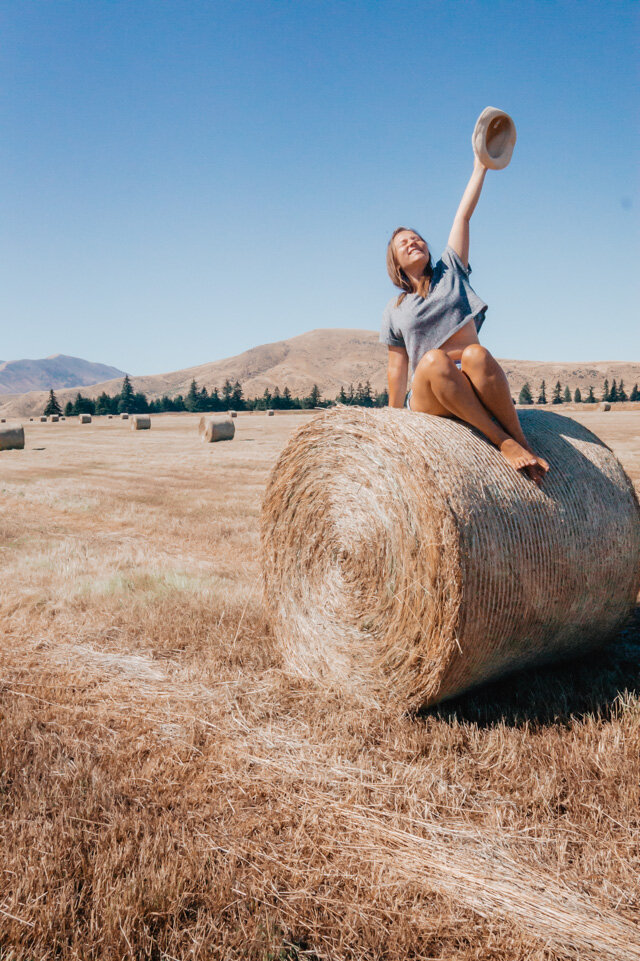 Farming Everything To Know About Working Holiday In New Zealand