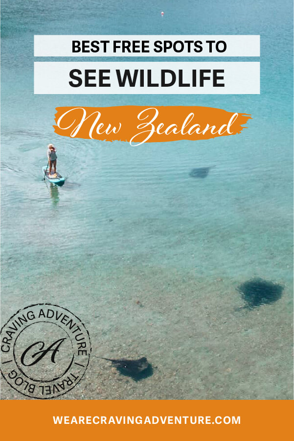 Best Places to see wildlife New Zealand