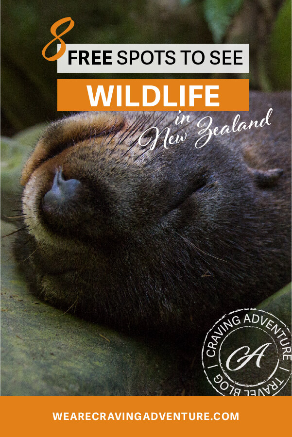 Seals Best Places to see wildlife New Zealand