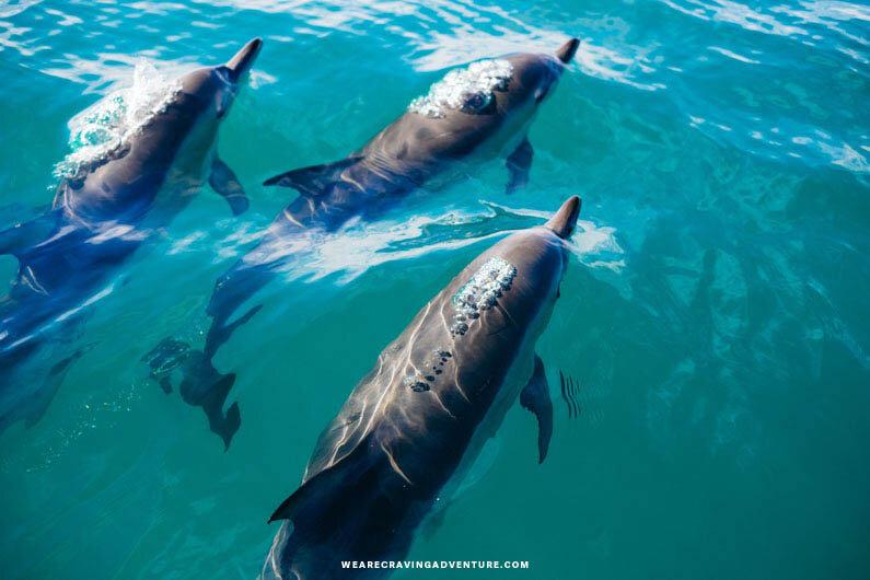 Dolphins Wildlife New Zealand Good Bad Ugly