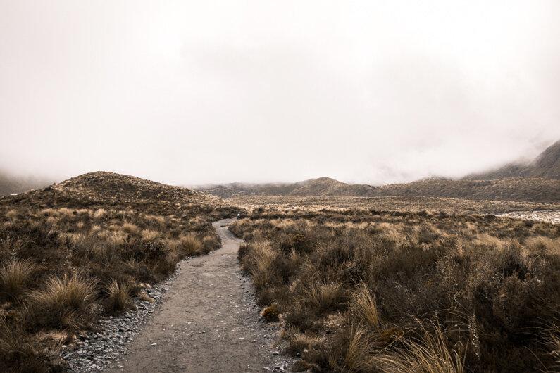 Tussock Fields Tongariro Alpine Crossing Guide