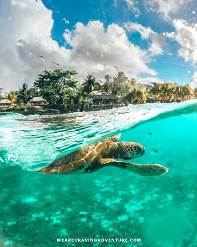 Stevensons at Manase Wild Sea Turtle