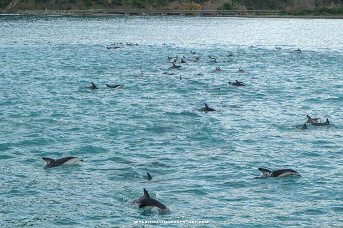 Best places to see dolphins in New Zealand -