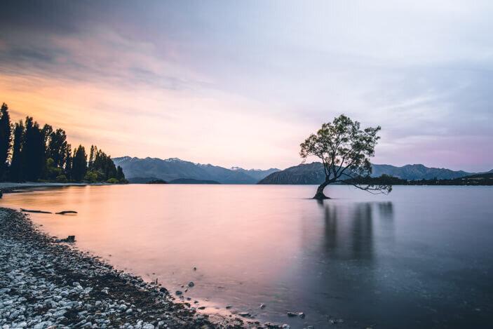 New Zealand South Island Road Trip That Wanaka Tree