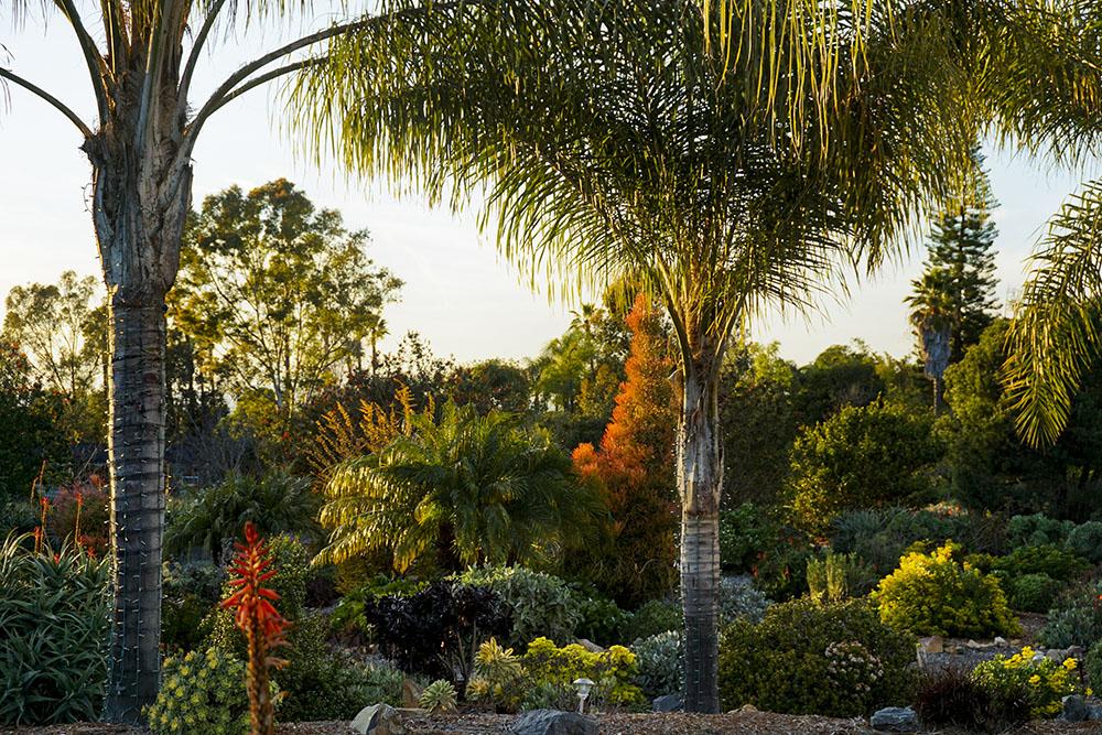 front-yard-garden-2.jpg