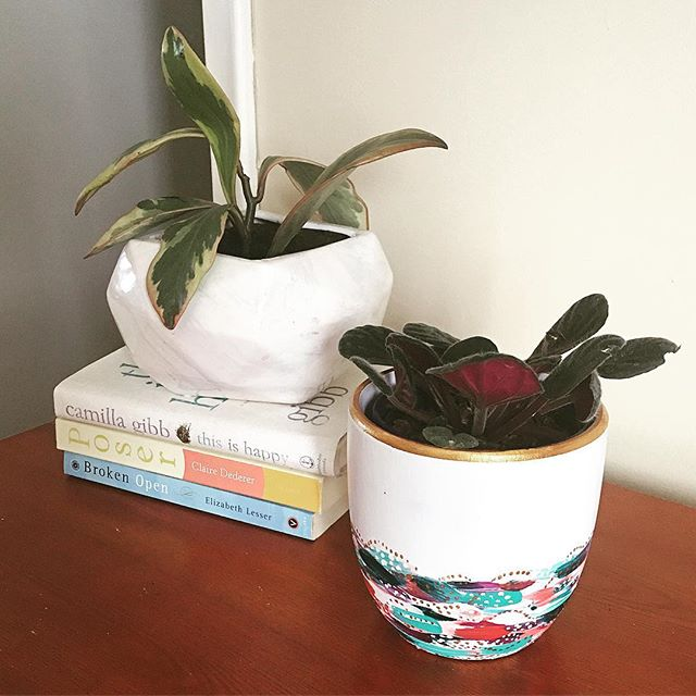 A new plant with an old favourite and some good reads 🥰 . . . . . . . #sasperrydesigns #plantstyling #plantshopping #plantpot #plantpots #capturequiet #seekinspirecreate #beautyyouseek #aquietstyle #plantsmakepeoplehappy #artforbreakfast #visualcrush #postitfortheaesthetic #calmversations #quietchaotics #interiorplants #botanicalpicmeup #urbanjunglebloggers #plantgang #apartmenttherapy #mysenseofhome #houseplantclub #jungalow #interiormilk #houseplantcommunity #therealhouseplantsofinstagram #bookworm #urbanjunglebloggers #interioriorsinspo #interiorplantstyling
