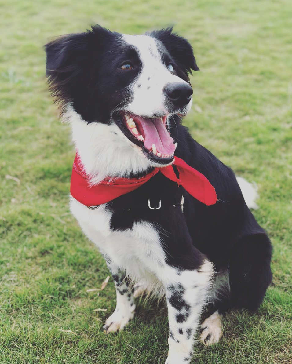 Meet Rio! - A friendly, comforting, and cuddly addition to your child's therapy session. Morgan works alongside her therapy dog to ensure her clients feel safe, validated, and heard.