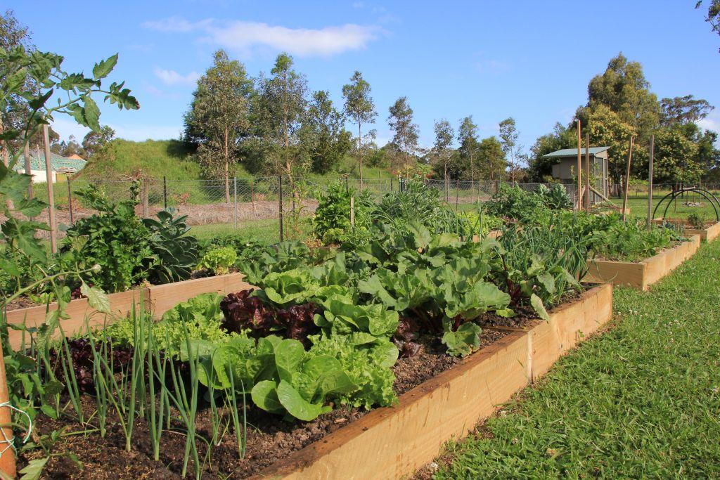 the-arbour-vegetable-garden.jpg