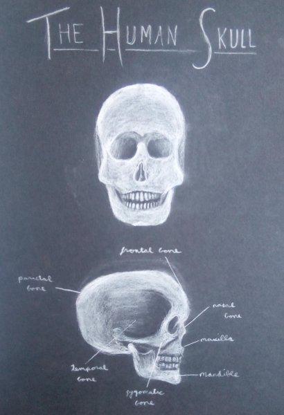 HumanSkull.jpg