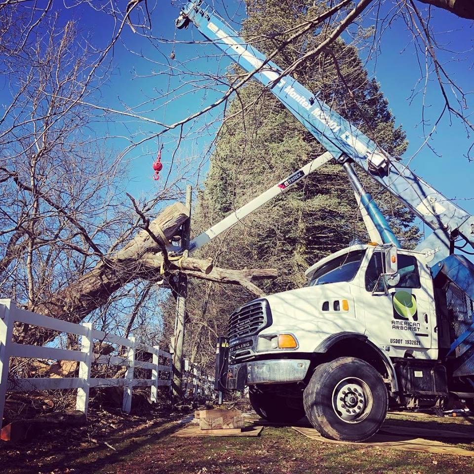 wind-damage-uprooted-burr-oak-removal-american-arborist.jpg