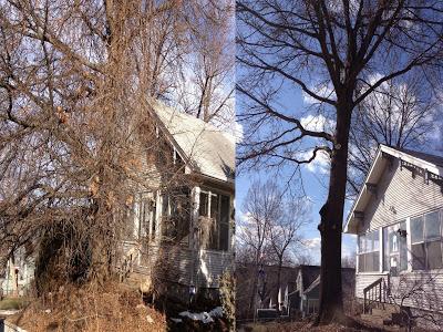 tree-trimming-habitat-before-after-american-arborist.jpg
