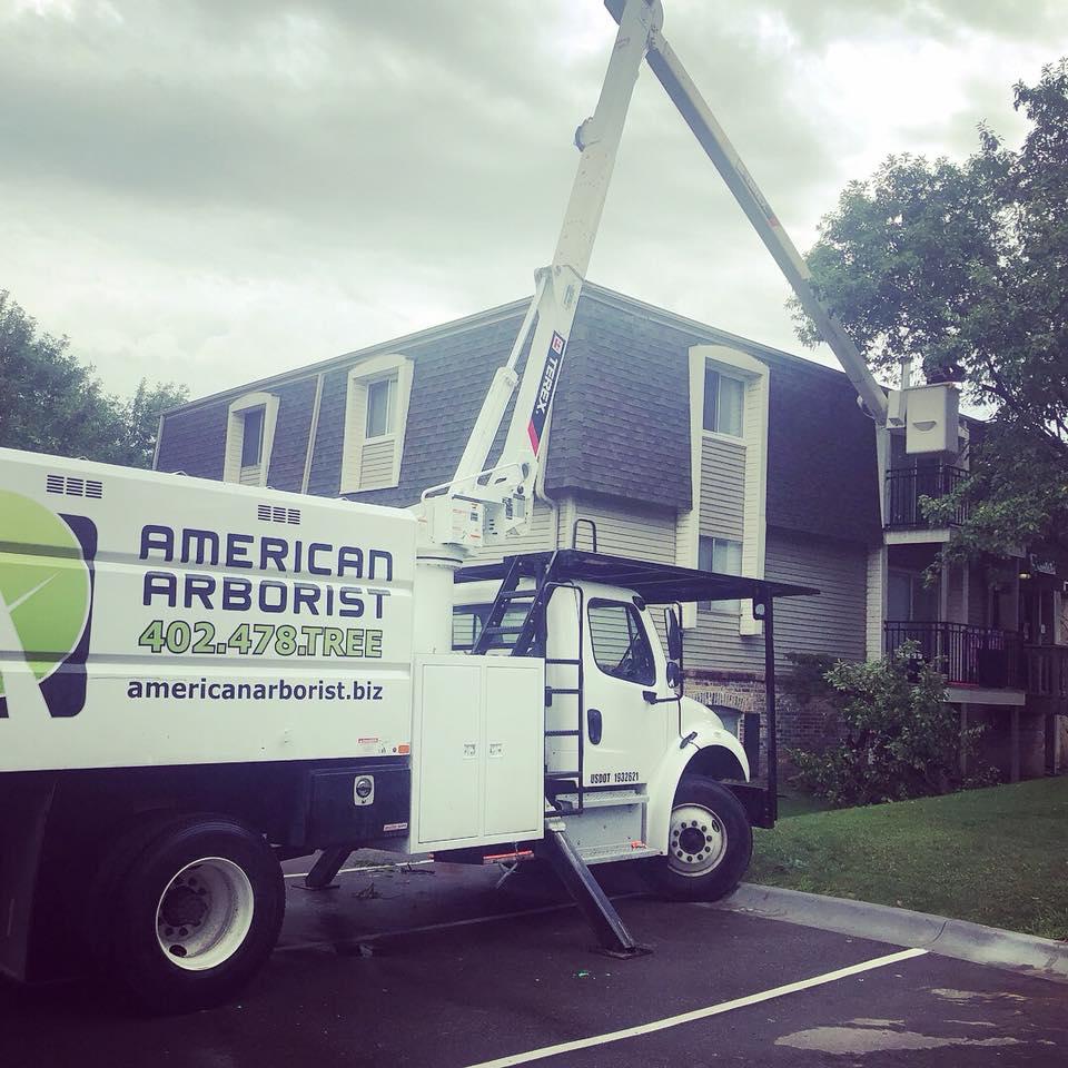 apartment-building-tree-trimming-american-arborist.jpg