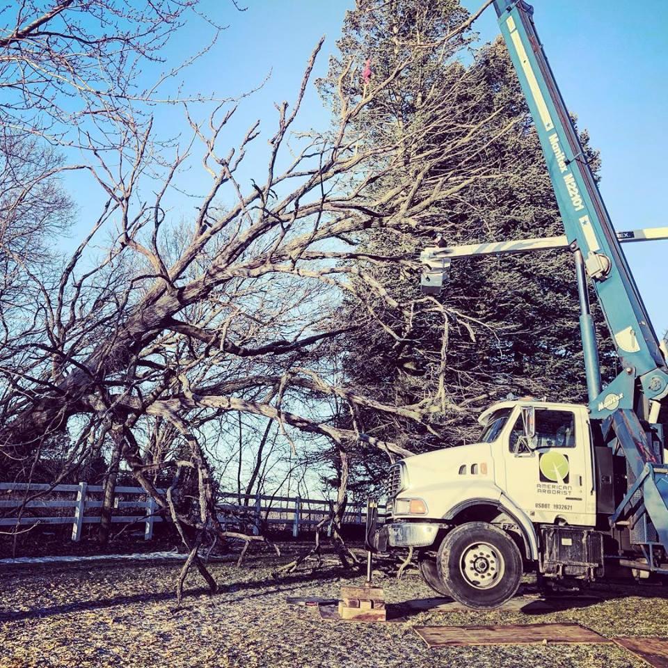 wind-damage-uprooted-burr-oak-american-arborist.jpg