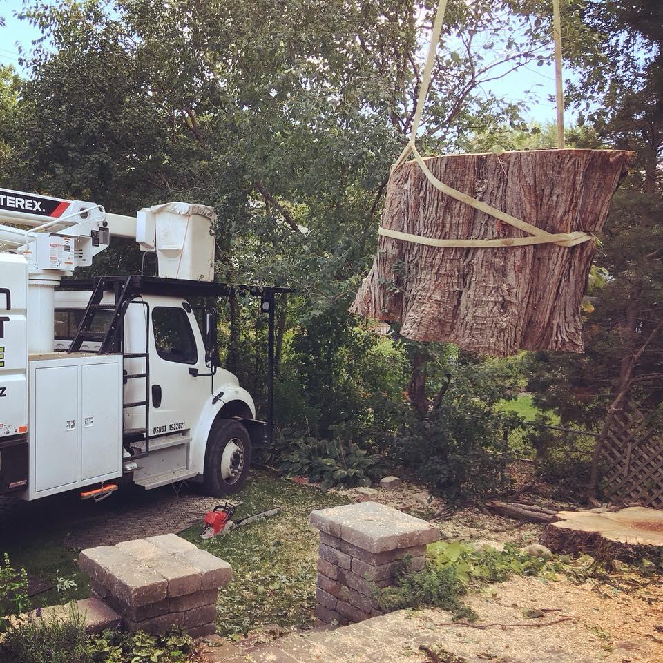american-arborist-tree-removal-crane.jpg