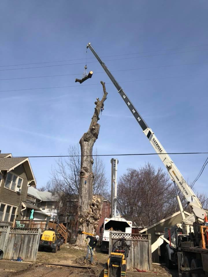 dundee-dying-cottonwood-removal-2-american-arborist.jpg