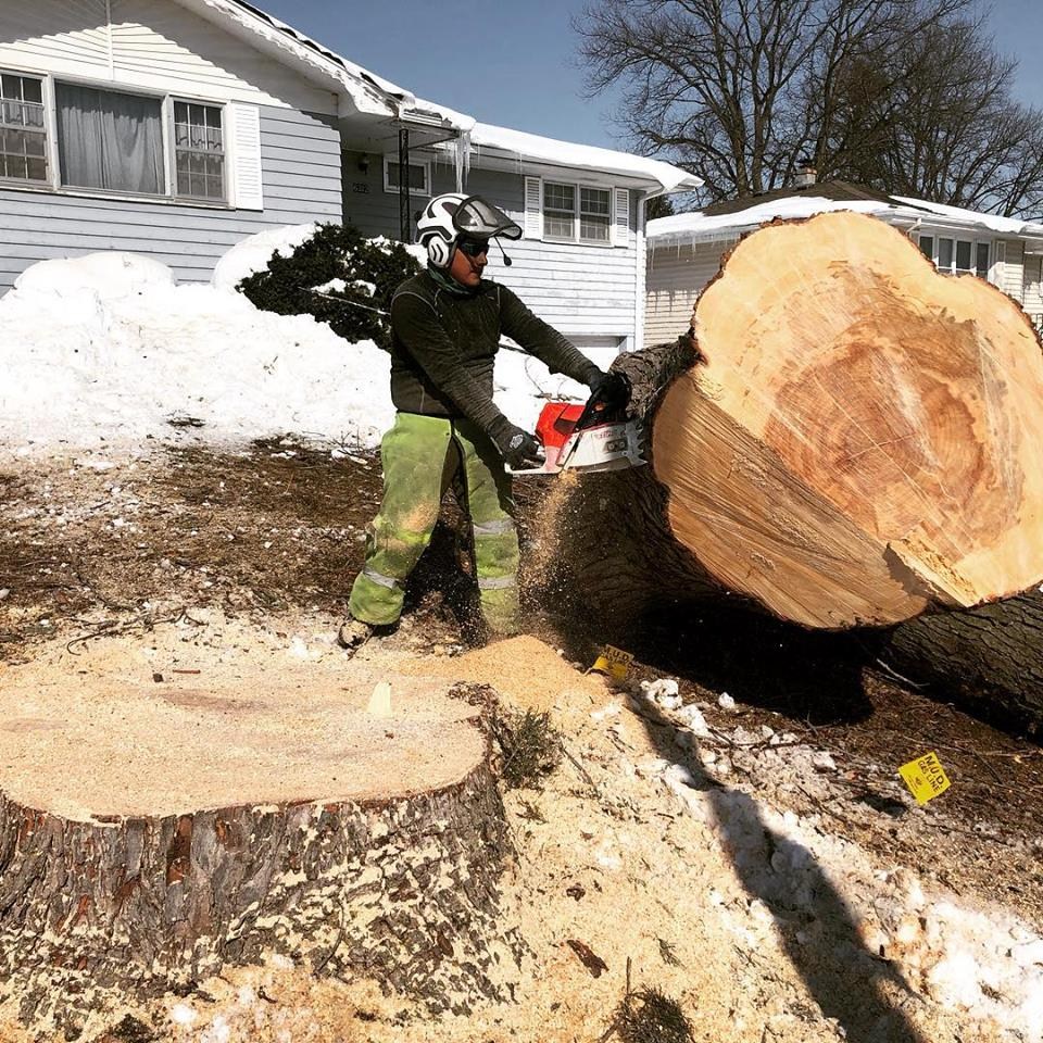 silver-maple-removal-american-arborist.jpg