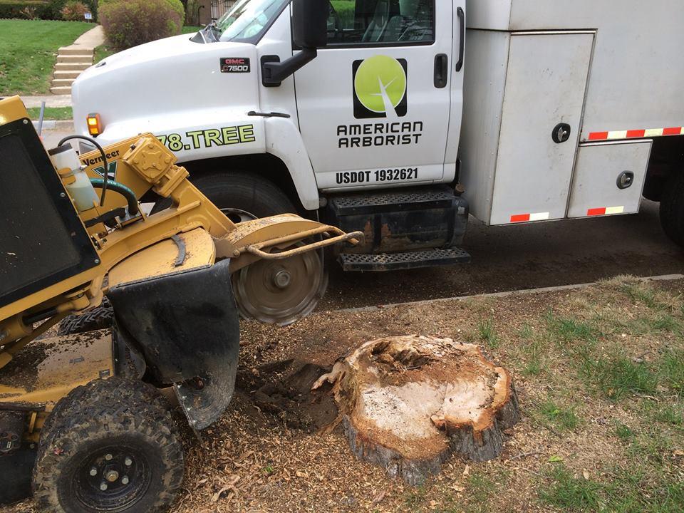 stump-grinding-before-american-arborist.jpg