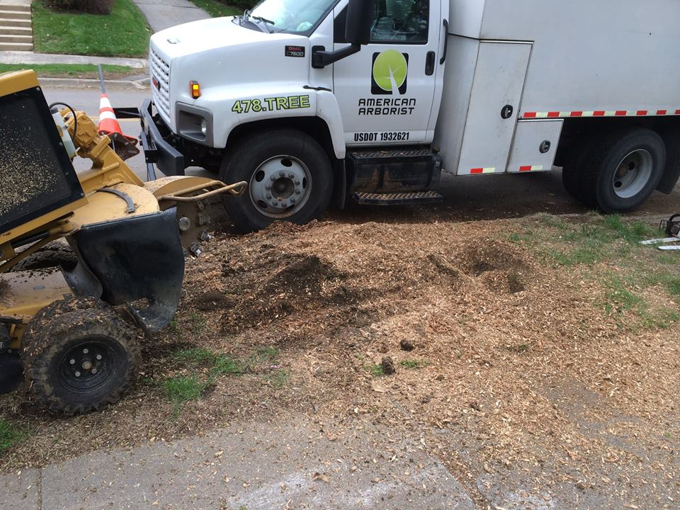 stump-grinding-during-american-arborist.jpg