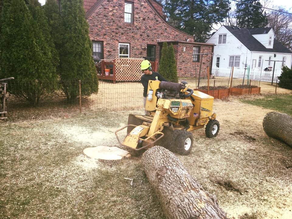 grinding-ash-stump-american-arborist.jpg