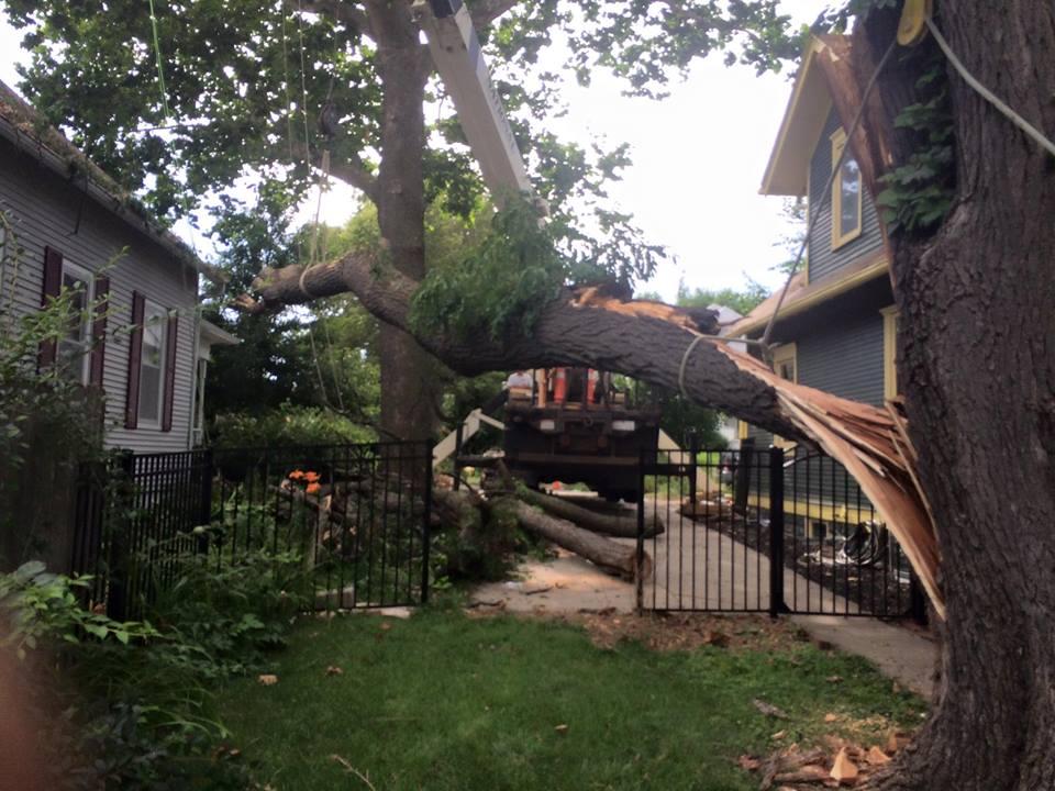 storm-damage-tie-crane-lift-american-arborist.jpg