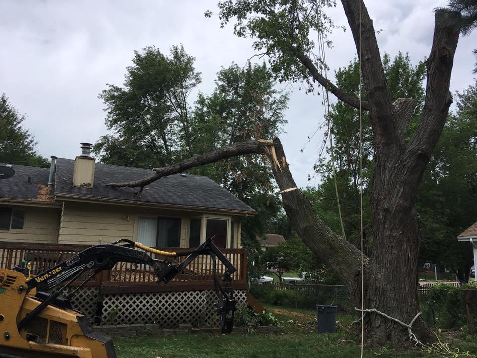 tornado-damage-american-arborist.jpg