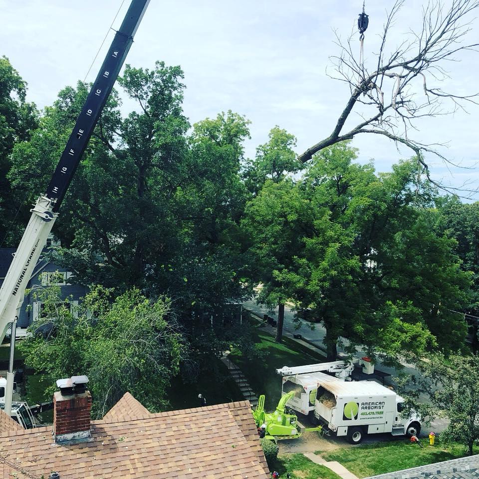 backyard-elm-tree-crane-removal-american-arborist.jpg