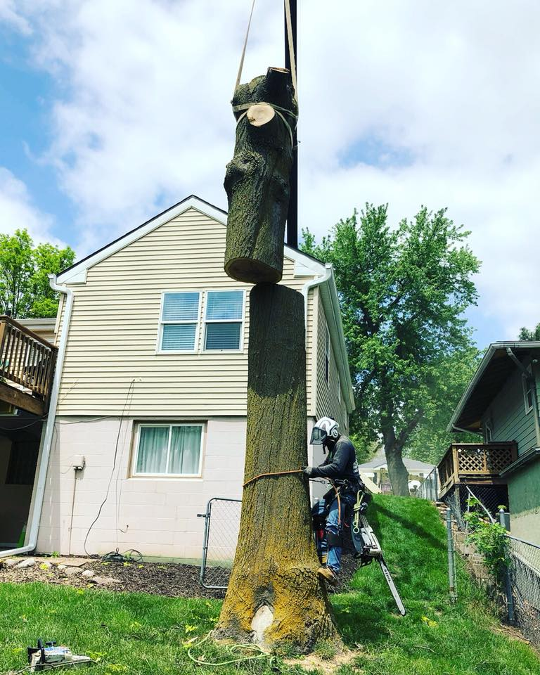 pin-oak-crane-removal-american-arborist.jpg