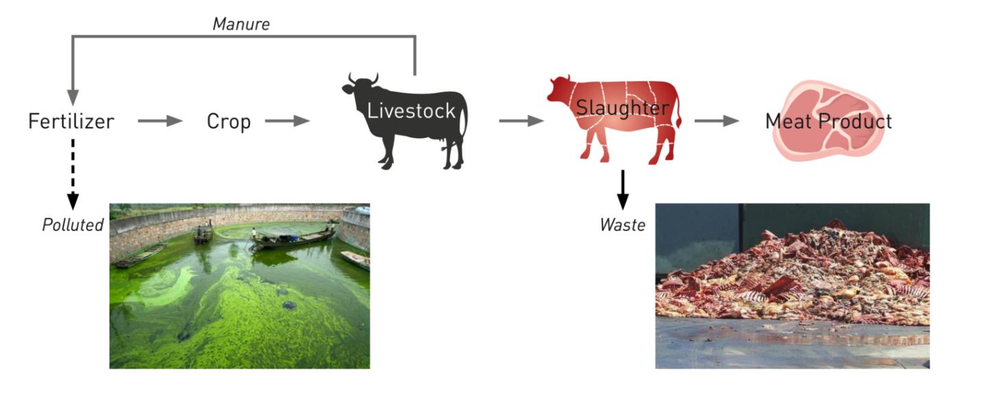처리시스템 없는 축산업에 환경오염
