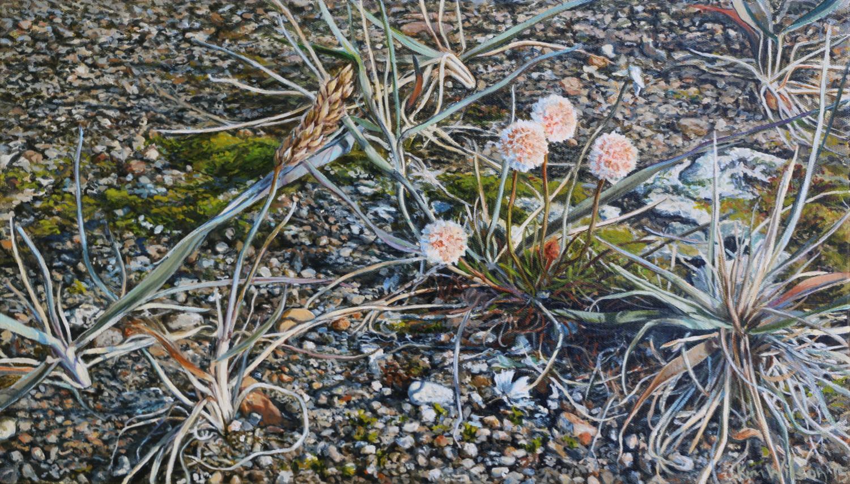 Wildflowers, Kolyuchin Spit