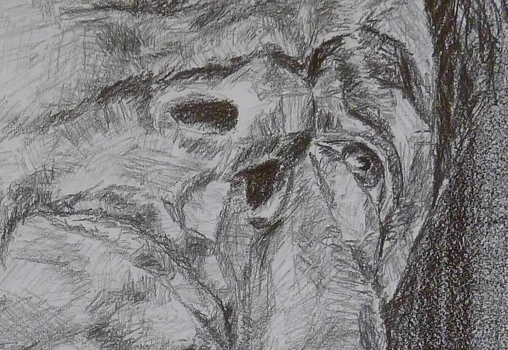 drawing-development-1