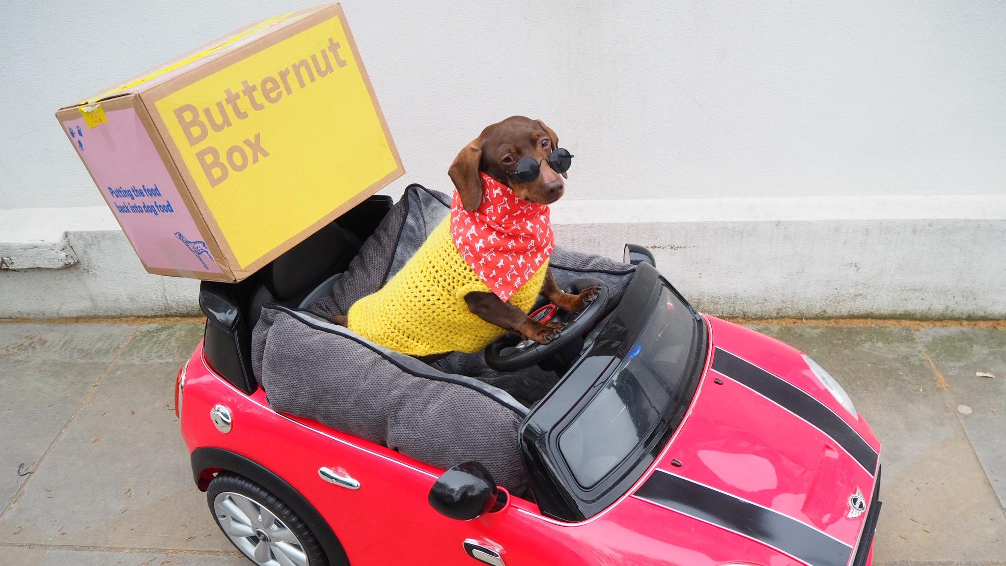 sausage dog driving butternut box mini bangers and mash dog collective
