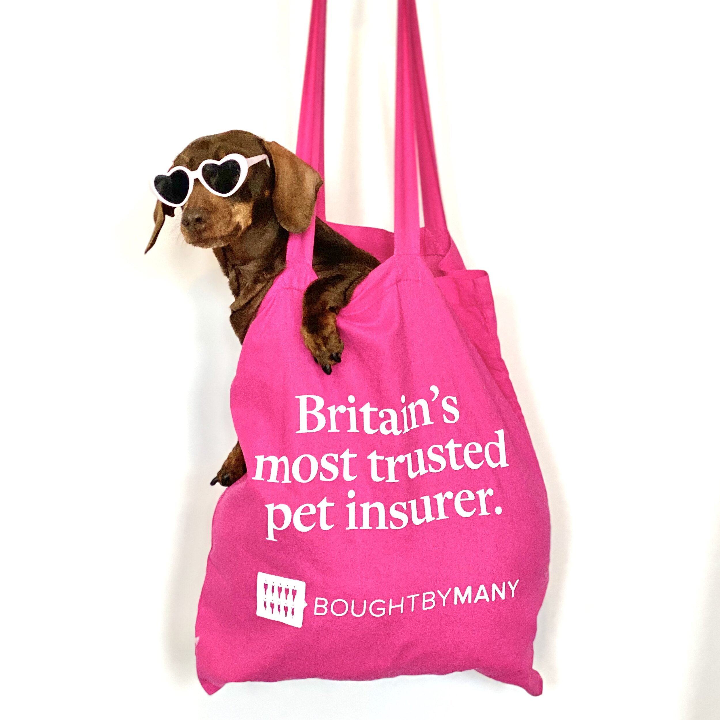 Bought by Many - Pet insurance — BANGERS&MASH