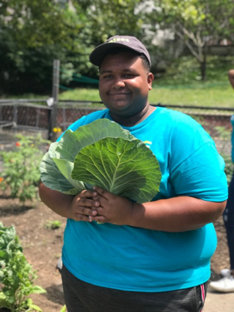 Ambassador Andy helps with the harvest. The group was strategic and picked the leaves that wouldn't continue receiving enough sunlight, and therefore wouldn't add value to the plant and wouldn't grow any larger.