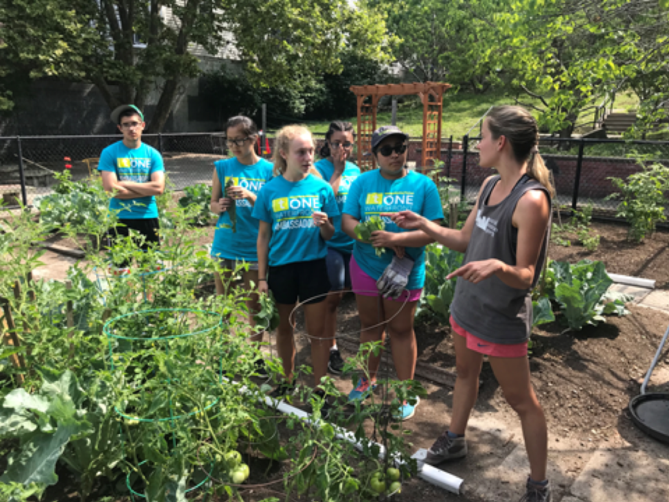 The group learned how to identify plants, and pitched in to harvest some early produce!