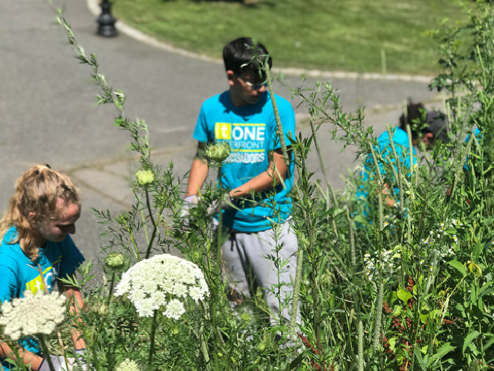Julie, Kevin, and Emily hard at work battling a jungle of weeds and overgrowth