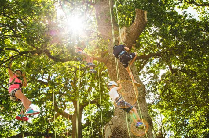 campbestival_dinglydell_treeclimbing_adam1616-3-21474452534.jpg