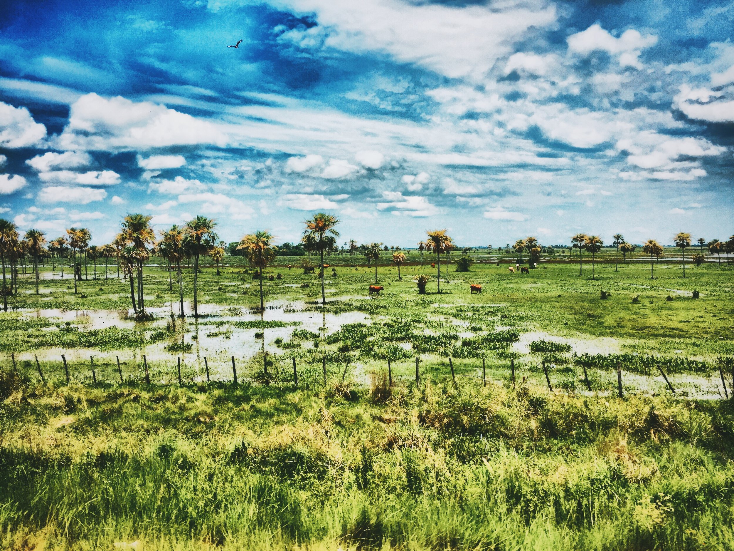 My swampy paradise