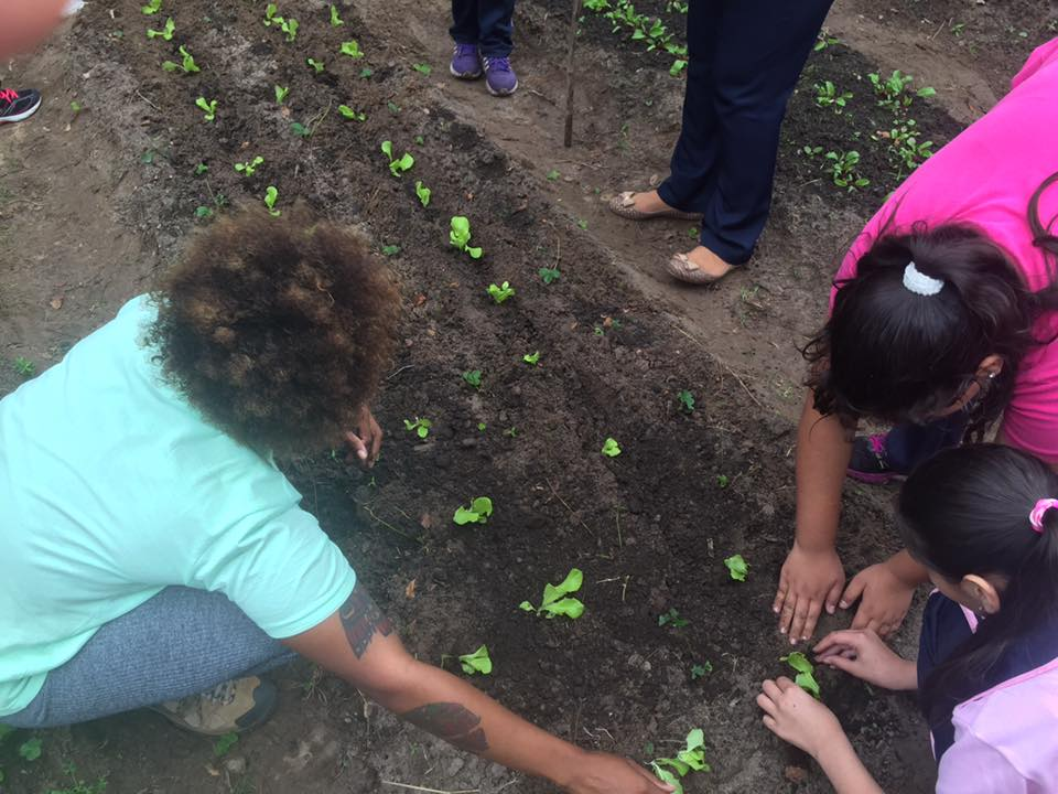 Working in the garden with the kids. During this lesson we learned about transplanting